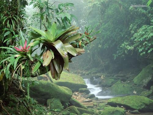 Тропический лес в Бразилии  30.12.13